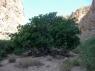 Dead's gorge 5
