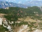 Larici su una mugheta (Alpe di Cosmagon)