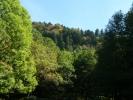 Foresta-Lama