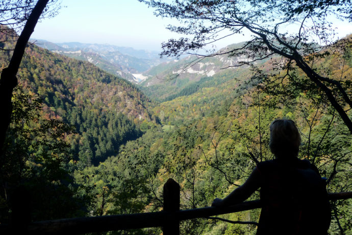 Foresta della Lama