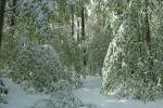 neve-foglie-faggio
